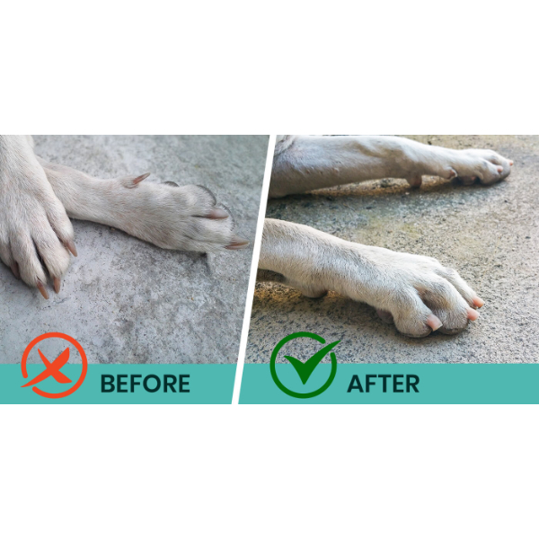 perro pal before and after